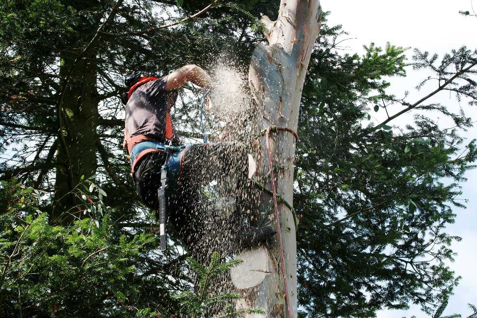 Tree Service Mobile AL - Cutting down a tree with a chainsaw