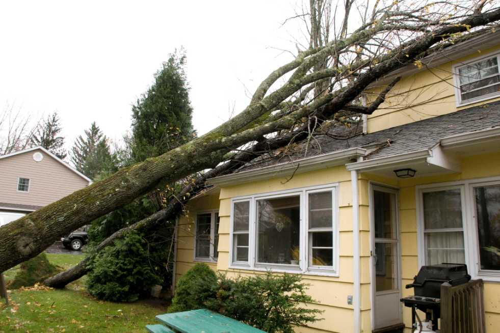 Tree Service Mobile AL - Emergency Tree Service