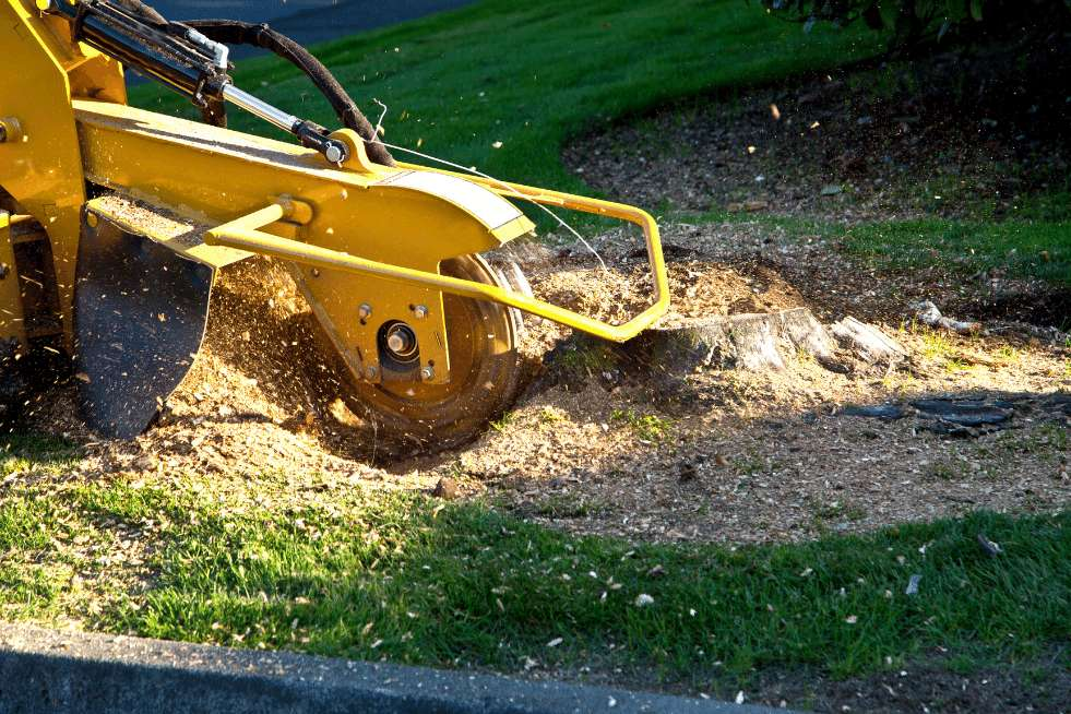 Tree Service Mobile AL - Stump Grinding