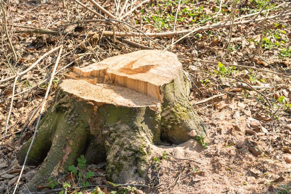 Tree Service Mobile AL - Stump that needs to be removed