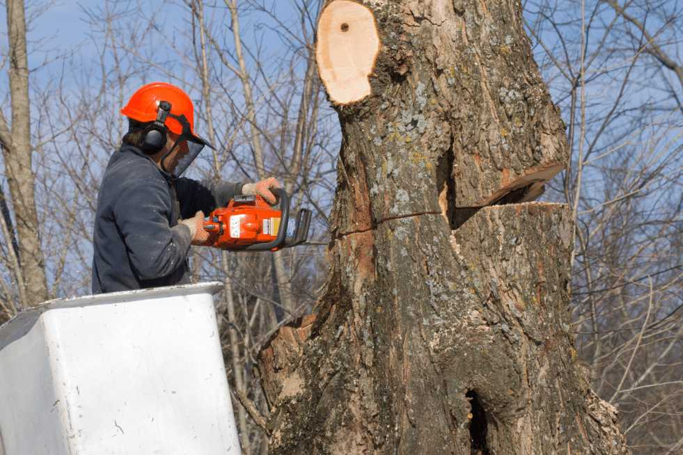 Tree Service Mobile AL - Tree Removal