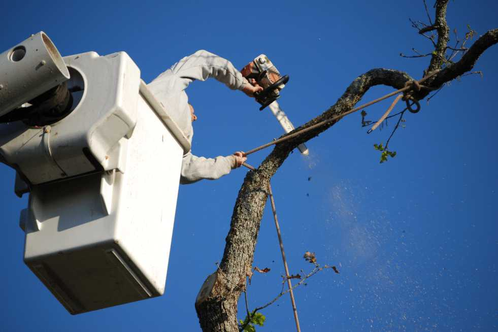 Tree Service Mobile AL - Tree Trimming & Pruning